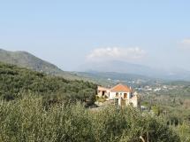 Olive Villas 2020